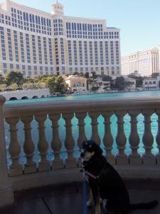 Choppy at the Bellagio