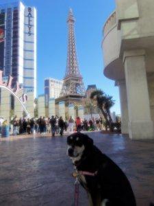 Choppy in Paris