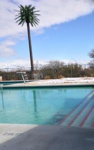 Palm Tree, Pool and Snow