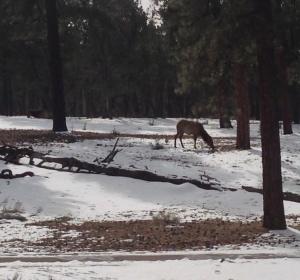 Elk Time