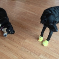 Dogs + Slippers = Amusement