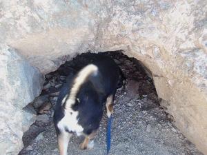 Choppy Checks Out a Tunnel