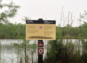 Another Alligator Warning