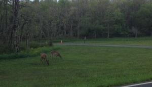 Problem Five (cont.): More deer.