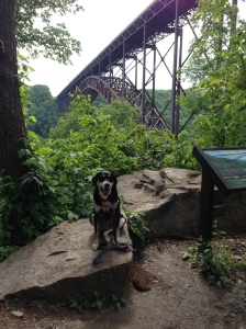 On the way home, Choppy and I stopped at the New River Gorge Bridge. This is Choppy yawning. Evidently, Choppy and I have different ideas of what is amusing. I think scenery is amusing. Choppy thinks rolling in dead things is amusing.