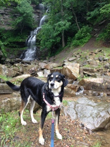 I was rather disappointed by our hike to South River Falls in Shenandoah National Park. While we were driving home, I pulled over to look at this absolutely random waterfall. It was far better than the South River Falls, and didn't require several miles of hiking to get to it.