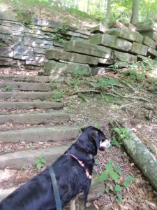 Choppy, still on the lookout for chipmunks. This time, not on a bridge, but next to some cool old stone stairs.