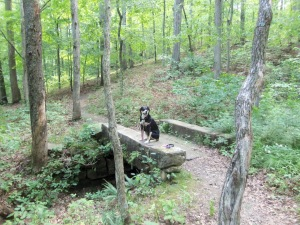 Here is Choppy surveying the woods around her. As they were chipmunk-infested, this scanning became a very consuming task for Choppy. Not to worry, as no chipmunks were harmed in the making of this post. Just as no animals have ever been caught or harmed by the less-than-fleet-footed Choppy.