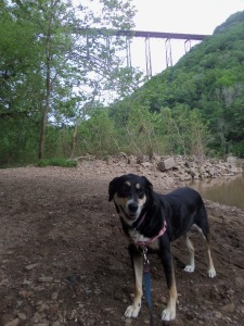 Further down the gorge. Choppy looks less bored, though in reality, she was mostly attempting to jump in the river. Not to swim, mind you, as she hates to swim. Just to get wet then roll in dirt prior to getting in the car.
