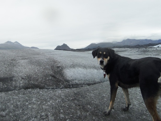 Climbing on a glacier is pretty cool (pun intended. Just like the previous post). It's also far dirtier than I expected, which you can see from Choppy's feet. At this point in the trip, I had stopped caring how dirty Choppy was.