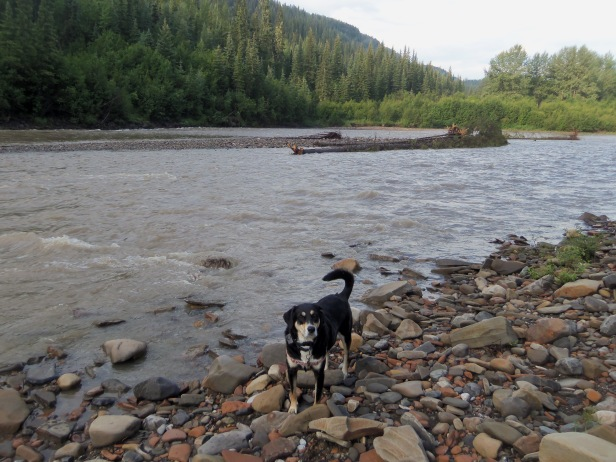 Choppy enjoying a little time next to the Sikianni River in British Columbia. This was on our trip up the Alaska Highway. I was going to make a snide remark here about the weather along the River today, and then I realized it is actually colder here than it is there. Well played, Canada. Well played.