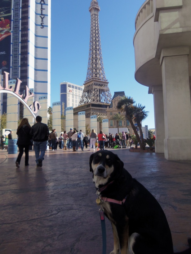 OK, so Choppy hasn't quite made it to the real Paris yet. But we'll always have Vegas.