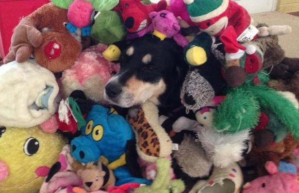 Choppy has just a few toys...