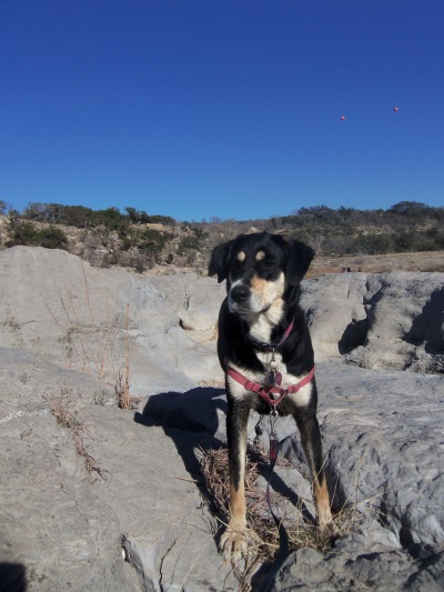 I'm pretty sure Choppy enjoyed the hike to the waterfall much more than any of her hikes up mountains.