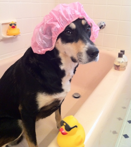 For a dog who is only wearing a shower cap, Choppy looks quite unhappy here.