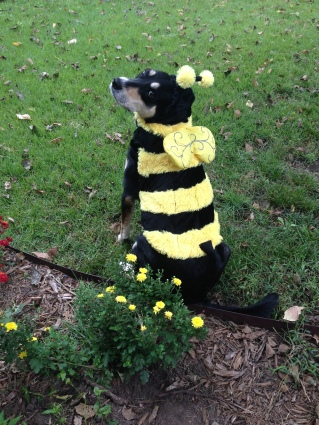 Choppy makes a great bee, even if she doesn't bee-lieve she does.