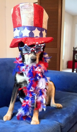 Everyone loves a patriotic dog (well, except Choppy, who probably thinks she can be patriotic without all the bells and whistles).