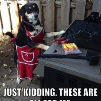 Meme Monday: Hot Dog