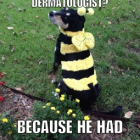 Bad Jokes: Bee Edition