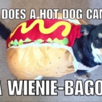 Bad Jokes: Hot Dog Edition