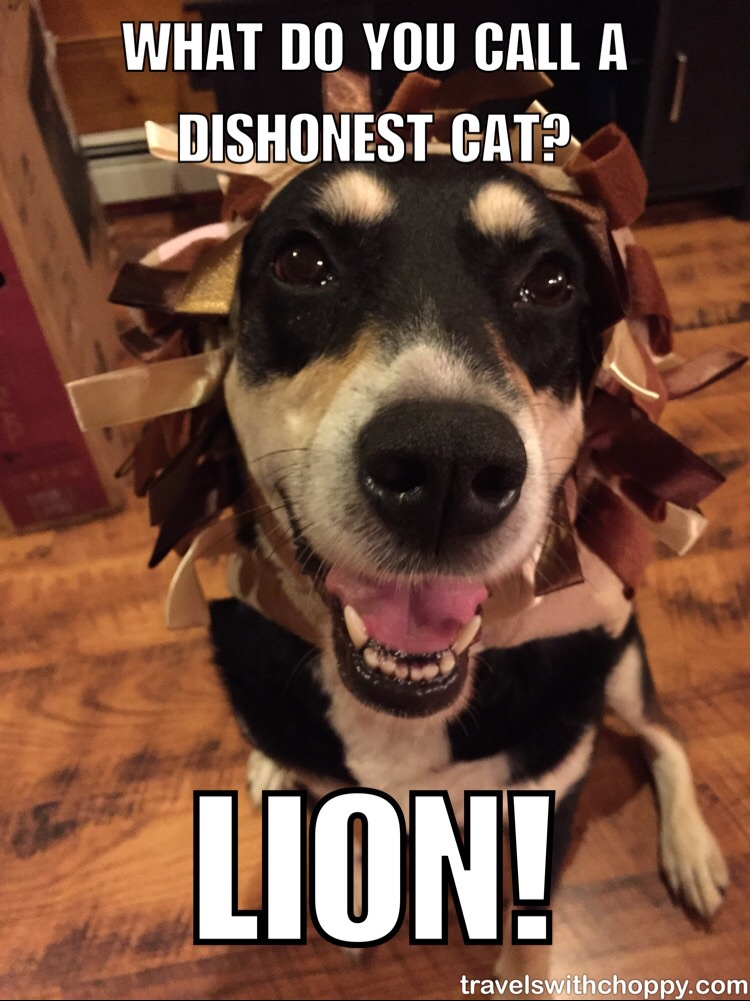 Bad Jokes Lion Edition Travels With Choppy
