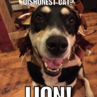 Bad Jokes: Lion Edition