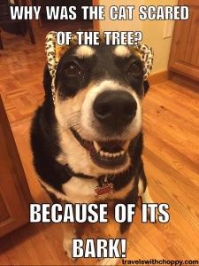 Its Bark
