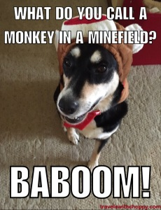 What do you call a monkey in a minefield? Baboom!
