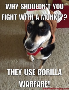 Why shouldn't you fight with a monkey? They use Gorilla Warfare!