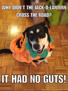Why didn't the jack-o-lantern cross the road? It had no guts!