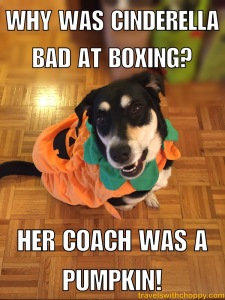 why was cinderella bad at boxing - her coach was a pumpkin