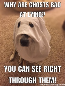 Why are ghosts bad at lying? You can see right through them.