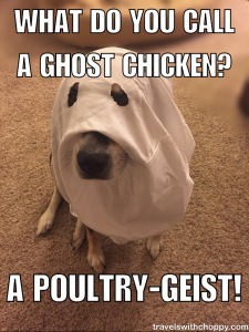What do you call a ghost chicken?  A poultry geist!