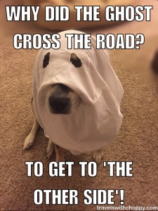 Why did the ghost cross the road? To get to 'the other side'!
