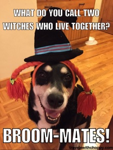 what do you call two witches who live together - broom mates