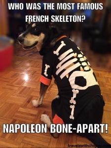 who was the most famous french skeleton - napoleon bone-apart