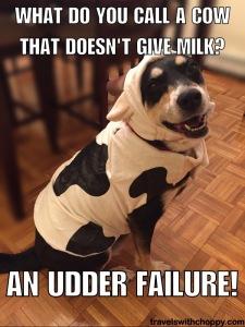 Or a milk dud!