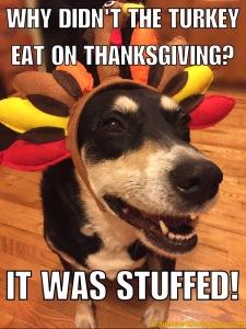 It was stuffed
