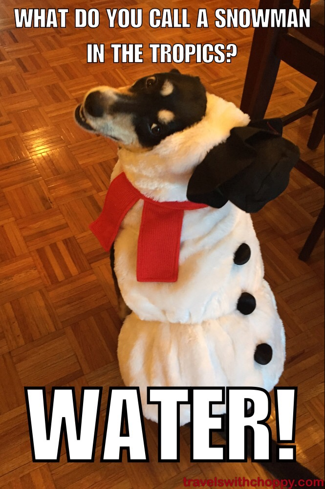 Bad Christmas Jokes.Bad Jokes Snowman Edition Travels With Choppy