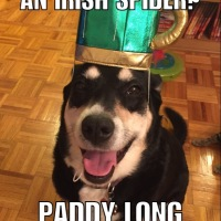 Bad Jokes: St. Patrick's Day Edition