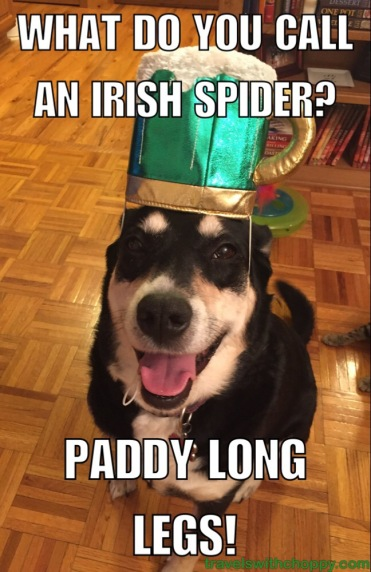Bad Jokes: St  Patrick's Day Edition – Travels with Choppy