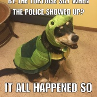 Corny Dog Jokes: Turtle Edition Part 2