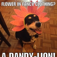 Corny Dog Jokes: Flower Edition