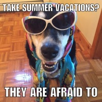 Corny Dog Jokes: Vacation Edition