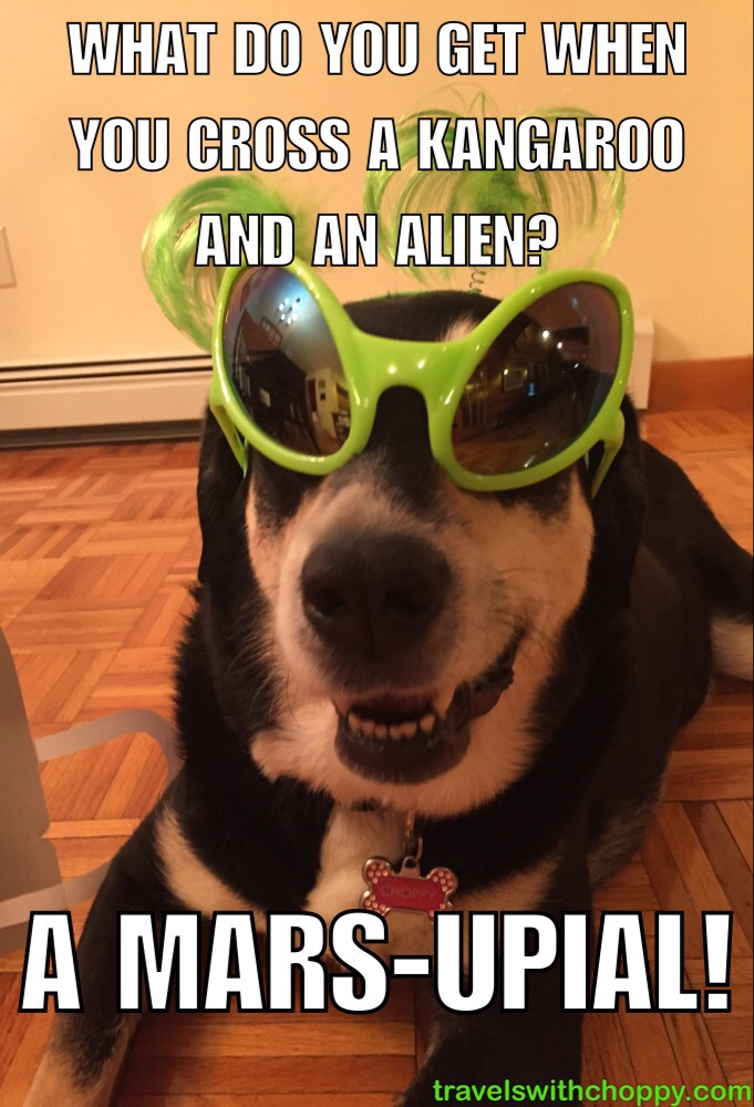 corny dog jokes alien edition travels with choppy