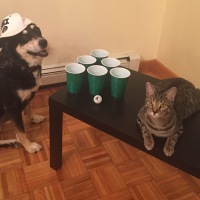 Happy Beer Pong Day!