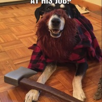 Corny Dog Jokes: Lumberjack Edition