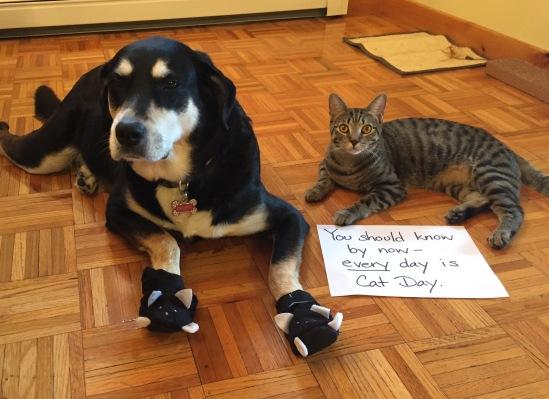 international cat day - photo #24