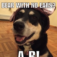 Corny Dog Jokes: Bear Edition Part Two