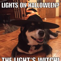 Corny Dog Jokes: Witch Edition Part 2